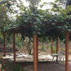 Garden tour and Permaculture Workshop