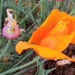 poppy May 2, '13