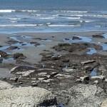 tide pools May 2, '13