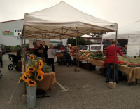 Farmers Mkt Aug 1, '15